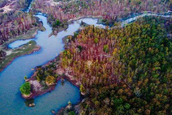 Khu rừng đẹp tựa trời Âu ở Bản Đôn, Đắk Lắk