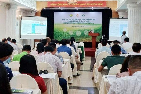 Diện tích canh tác ngô công nghệ sinh học ở Việt Nam khoảng 92.000ha