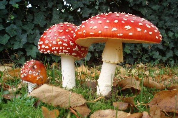 5 người ngộ độc sau khi ăn nấm rừng