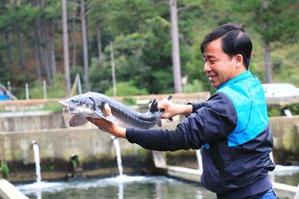 Quản chặt chất lượng cá tầm thương phẩm