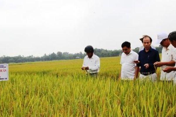 123 tỷ đồng cho đề án khuyến nông bền vững
