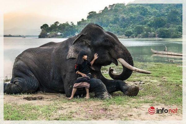 Đến Hồ Lắk, chiêm ngưỡng vẻ bình yên những chú voi 'ăn, ngủ' cùng người bản địa