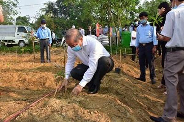 Thừa Thiên Huế: Trồng mới ít nhất 7 triệu cây xanh giai đoạn 2021 - 2025
