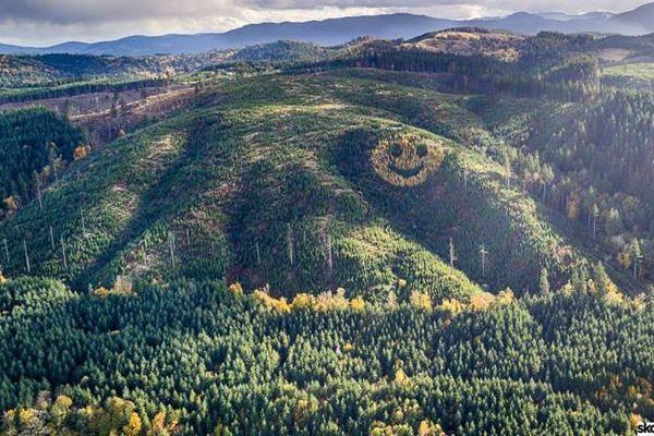 Mặt cười khổng lồ xuất hiện trên sườn đồi được tạo thành từ... cây xanh