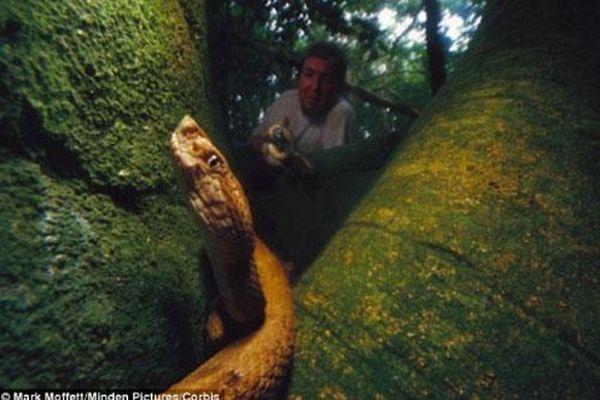 Những nơi rắn tập trung nhiều gây kinh sợ nhất thế giới