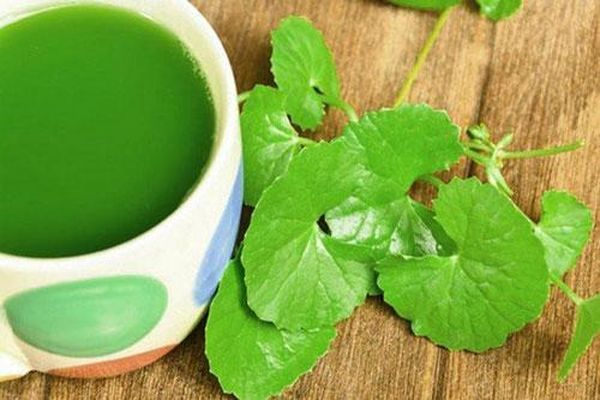 Những lợi ích thần kì của rau má mà rất nhiều người vẫn coi như 'rau dại'