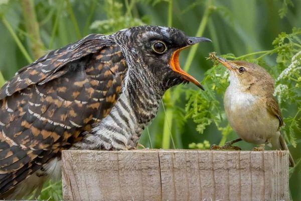 'Ác mộng của chim mẹ' vào top ảnh thiên nhiên hoang dã đẹp nhất tuần