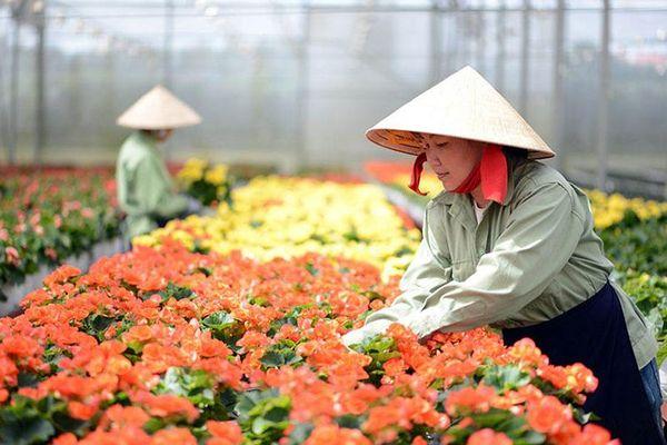 Xây dựng Đà Lạt trở thành trung tâm sản xuất giống hoa lớn nhất cả nước