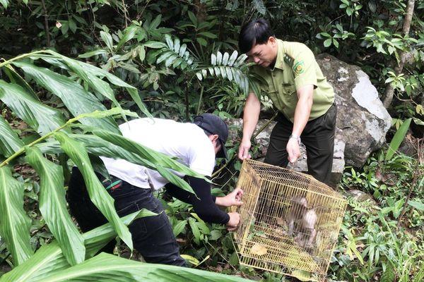 Thả 3 cá thể culi, khỉ mặt đỏ, khỉ mốc về với rừng tự nhiên