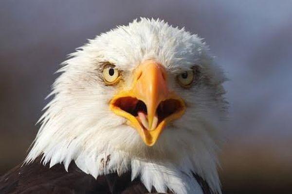 Vì sao loài chim không có răng, câu trả lời đơn giản đến bất ngờ