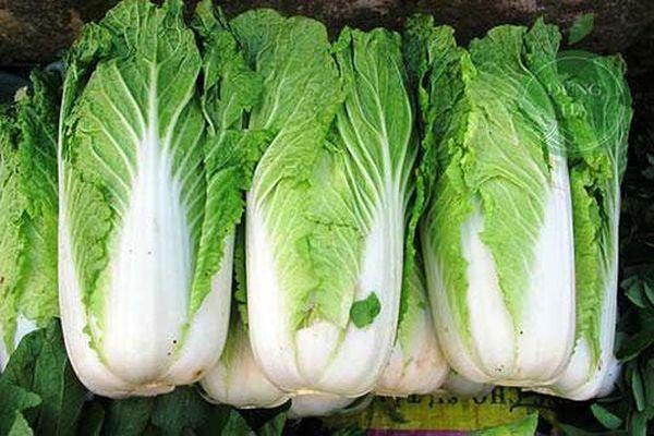 5 nhóm người không nên ăn cải thảo, tránh rước thêm bệnh vào thân