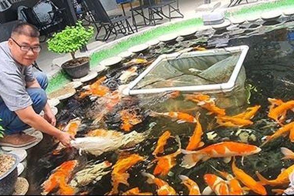 Chơi Cá Koi thu hút mọi lứa tuổi
