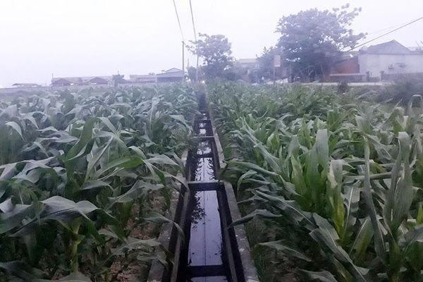 Chuyện quản lý: Phát triển thủy lợi gắn với giá trị gia tăng ngành nông nghiệp
