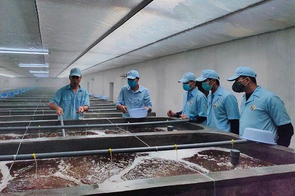 Hướng đến khu nông nghiệp ứng dụng công nghệ cao cấp tỉnh về thủy sản