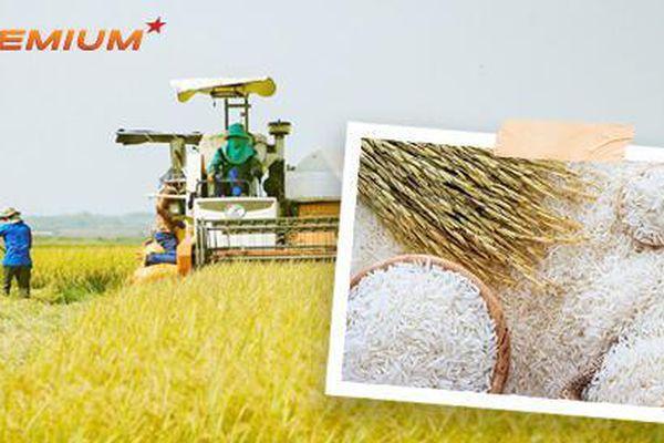 Biến gạo thành 'hạt ngọc trời' để vươn lên số 1 thế giới