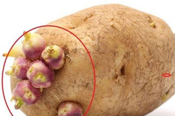 4 loại thực phẩm nảy mầm chứa toàn chất độc, tuyệt đối không nên ăn