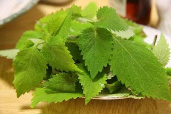 4 loại rau khi ăn lẩu không nên cho vào kẻo 'rước họa vào thân'