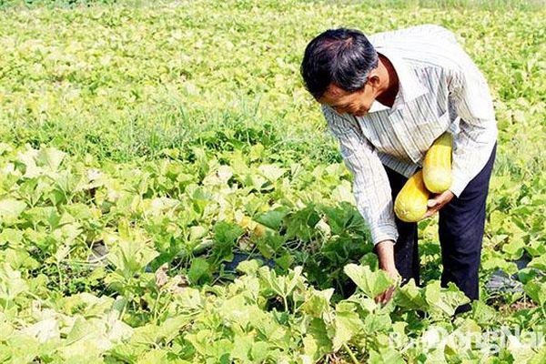 Chưa xảy ra khô hạn trong sản xuất nông nghiệp