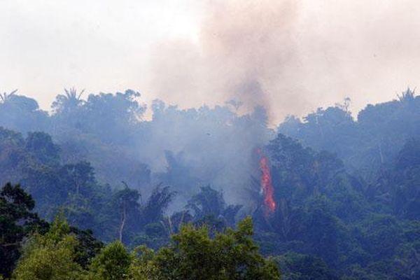 Tăng cường công tác quản lý, bảo vệ, phát triển rừng và phòng, chống cháy rừng
