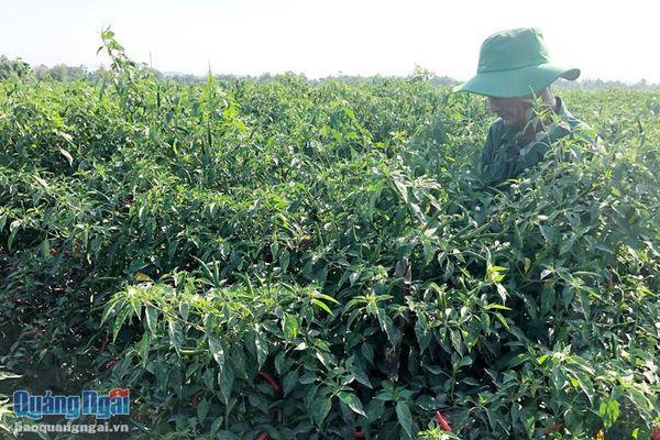Bỏ ngỏ lĩnh vực chế biến nông sản