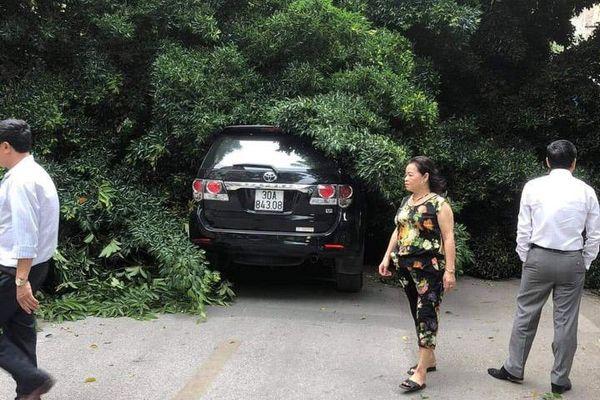 Cây xanh đổ chắn ngang phố Lê Quý Đôn (quận Hai Bà Trưng)