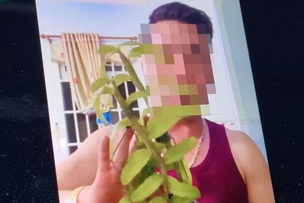 Cách dân buôn lan đột biến tạo 'phông bạt' trên Facebook
