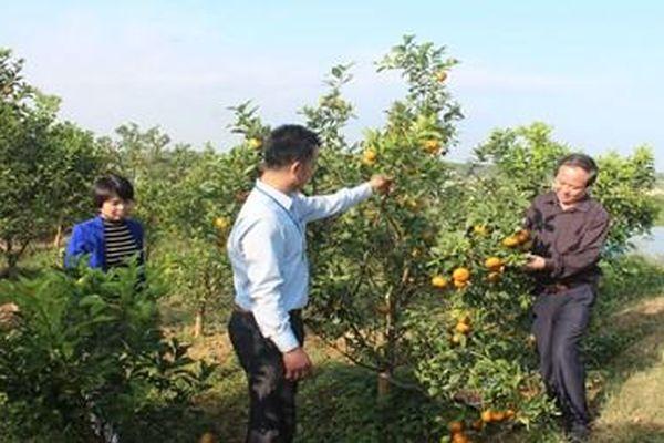 Tân Yên (Bắc Giang): Nhân rộng điển hình tiên tiến