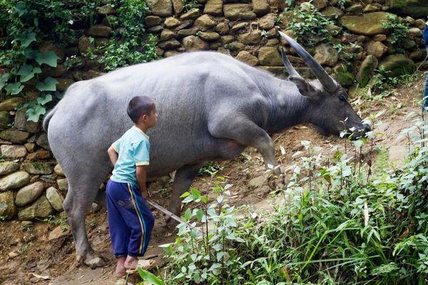11 loài vật báo Tây điểm tên phải ngắm ở Việt Nam