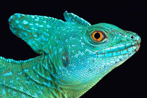 Vẻ đẹp khác thường của những loài động vật máu lạnh