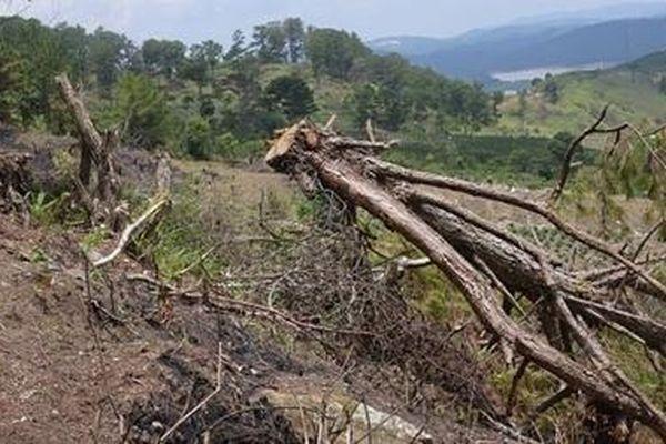 Đình chỉ công tác 4 trưởng Ban Quản lý rừng ở Lâm Đồng