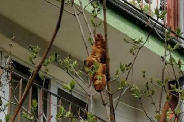 'Con vật lạ' xuất hiện trên cây khiến người dân náo loạn, biết sự thực ai nấy thở phào