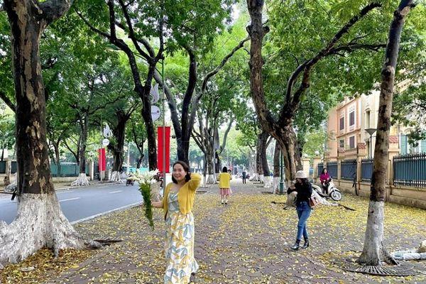 Hà Nội: Con đường Phan Đình Phùng phủ sắc vàng lá sấu rụng sau cơn mưa