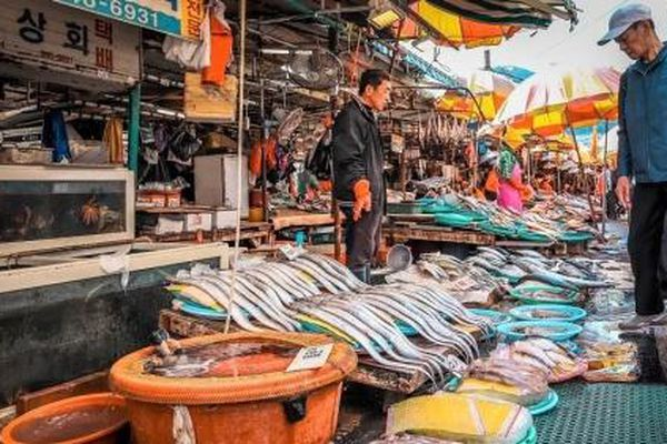 'Thoát' thẻ vàng IUU: Hàn Quốc dùng 'bàn tay thép'