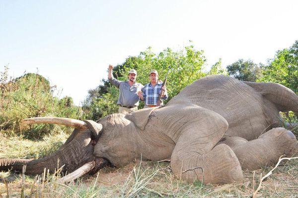 Zimbabwe cho phép săn voi với giá 70.000 USD/con