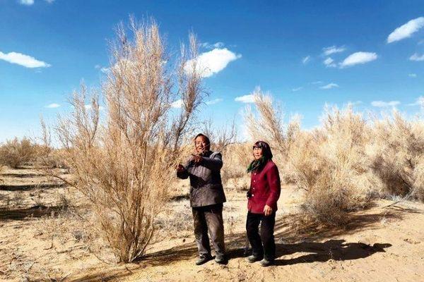 Cặp vợ chồng già dành gần 20 năm trồng cây trên sa mạc