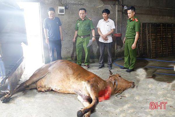 Mua bán, giết mổ 'chui' gia súc khác gì phá hại công tác phòng dịch ở Hà Tĩnh
