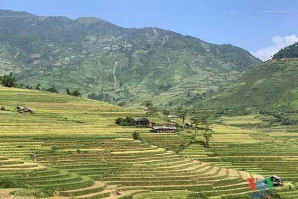Vùng cao Yên Bái vào 'mùa vàng'- mùa đẹp nhất trong năm