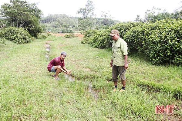BQL Dự án NN&PTNT Hà Tĩnh 'loay hoay' xử lý ruộng bị bồi lấp ở Đức Thọ
