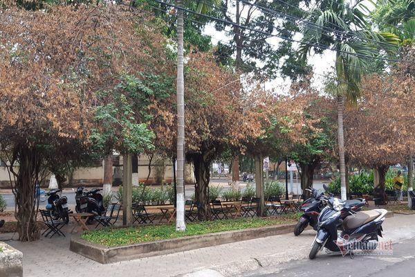 Đắk Lắk chỉ đạo điều tra thủ phạm triệt hạ giàn hoa giấy giữa trung tâm thành phố