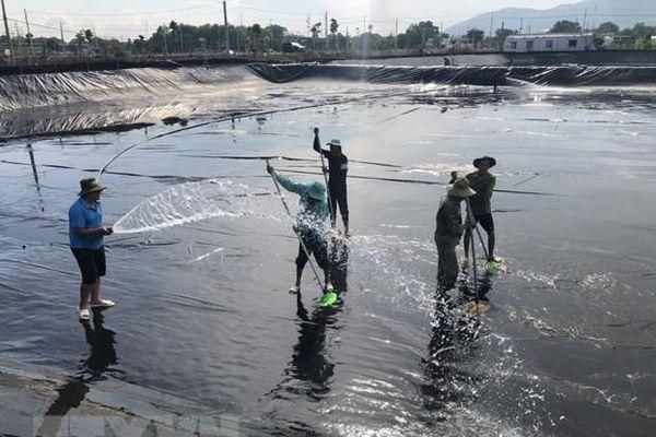 Bình ổn giá thức ăn thủy sản để tăng sức cạnh tranh tiêu thụ sản phẩm