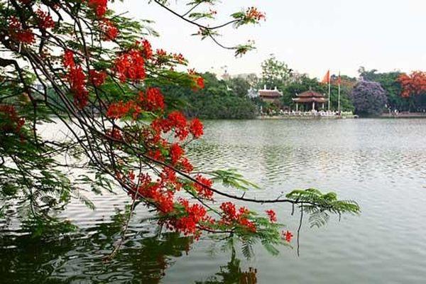 Đẹp nao lòng trước cảnh hoa phượng 'thắp lửa' bên Hồ Gươm
