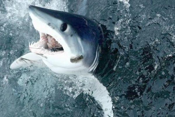Chiến đấu với cá mập hung dữ, người đàn ông thoát chết thần kỳ