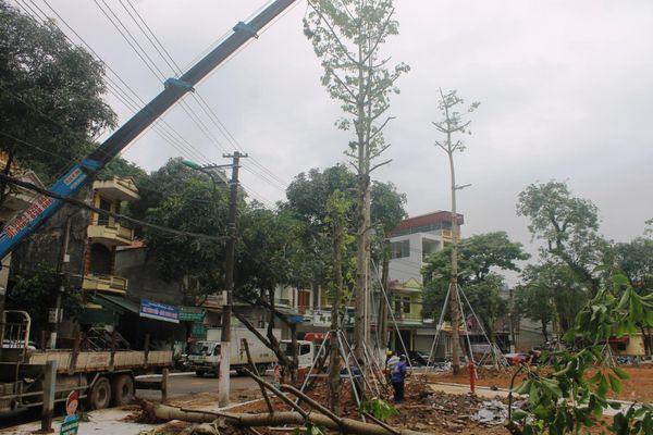 Thành phố Hà Giang cắt tỉa cây xanh đường phố bảo đảm an toàn mùa mưa bão