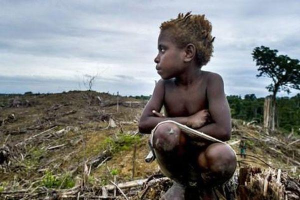 Huy động ít nhất 1 tỷ USD viện trợ tài chính cho các hoạt động bảo vệ rừng