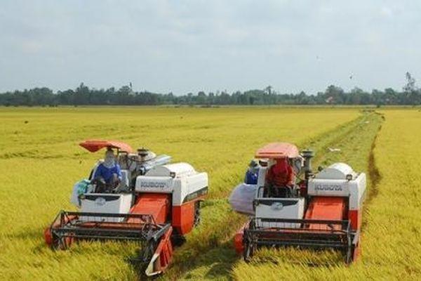 Khẩn trương thu hoạch lúa đông xuân vùng Bắc Trung Bộ