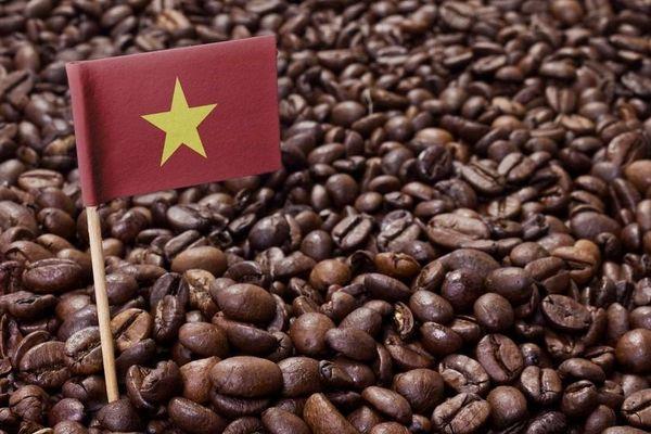 Giá cà phê hôm nay 30/4: Quay ngoắt giảm mạnh, còn khả năng tăng trở lại?