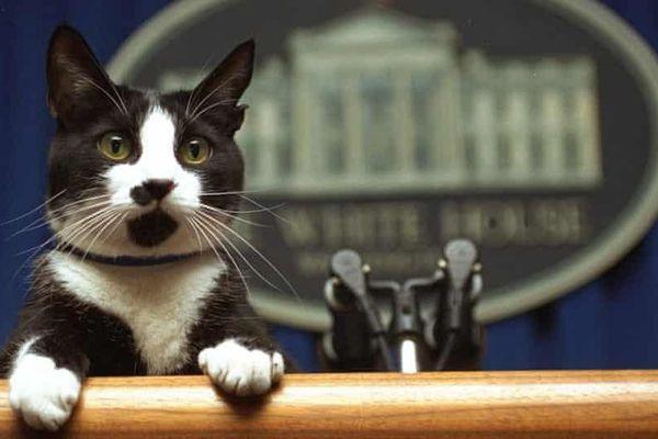 Gia đình Biden nuôi thêm mèo