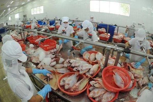 Một công ty thủy sản lỗ gần 1.000 tỷ, nợ Sacombank hơn 950 tỷ đồng