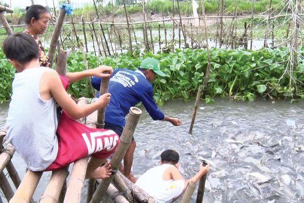 Chung tay bảo vệ đàn cá tự nhiên