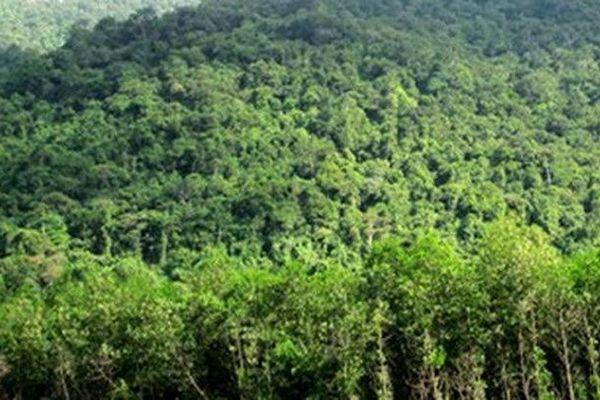 Công bố hiện trạng rừng năm 2020